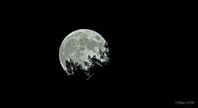 Lever de lune forestier